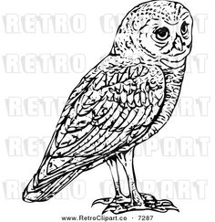 vector-clipart-of-a-retro-black-and-white-owl-by-prawny-vintage-7287.jpg (600×620)