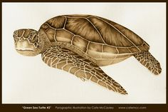 """Green Sea Turtle #2""  Burned on watercolor paper."