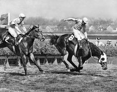 May 6, 1965: This photo was originally published in a sequence of pictures. At the Aqueduct Spring Steeplechase, Mako (No. 8) and the jockey Pat Smithwick lost their footing on the final jump. Gramatam (No. 2) and the jockey Robert S. McDonald went on to win.