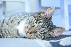 #Myphoto #Happy #Cat #Photography