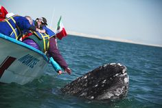 Whale Watching in Baja California Sur, Mexico.