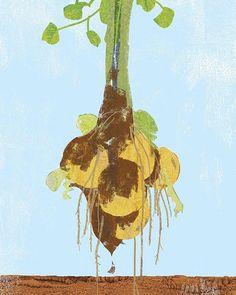 #potatoes #vegetables #food #illustration #art #cooking #japan #tatsurokiuchi #life