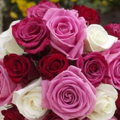 Roses are perfect anytime of the year!!