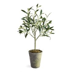 This Potted Olive Tree is the finishing touch to your space. Realistic-looking and full of form, its no-maintenance design makes an easy addition to your kitchen or living room styling. Potted Olive Tree, Faux Olive Tree, Make A Family Tree, Amazon Home Decor, Tree Clipart, Orchid Care, Tree Photography, Tree Designs, Autumn Trees