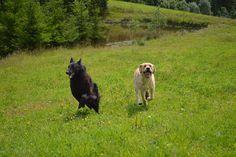 Gårdstunet Hundepensjonat: Gjester kommer og gjester drar - et herlig hundeli...