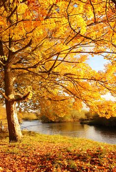 Find a Fall color palette for your home simply by looking outdoors. #fall #2013 #homedecor
