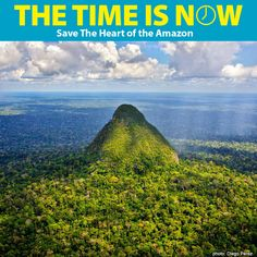 Save the Heart of the Amazon at The Rainforest Site
