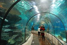 The Aquarium Barcelona is a popular tourist attraction in #Barcelona which boasts a huge oceanarium with sharks that you can have a close look at from an 80m long underwater tunnel. #travel #spain