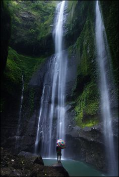 Madakaripura (The Hidden Legend) Waterfall in Probolinggo, East Java, Indonesia. This spectacular waterfall lies hidden at the end of a deep valley in the foothills of the Tengger range. The water has cascades from the dense forest above. The primary attraction is its natural environment that is encircled by 7 waterfalls and caves.