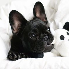 Are you a new puppy owner or about to be one? Make sure you check out these 5 essential tips for helping your puppy develop into a happy, well-adjusted dog: http://www.styletails.com/2016/11/30/5-great-ways-to-stimulate-your-puppys-developing-brain/