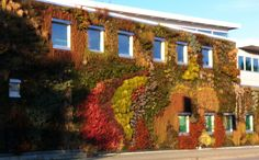 Visit the largest living wall in North America at Semiahmoo Public Library in Surrey, BC! #SurreyBC #livingwall