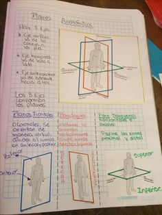 Planos anatomicos College Notes, School Notes, Med School, School Motivation, Study Motivation, Medicine Notes, Medical Anatomy, Human Anatomy And Physiology, Anatomy Study