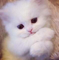 Emergency Kittens (@EmrgencyKittens) on Twitter