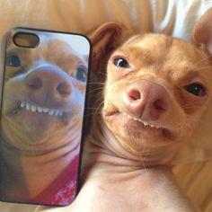 Ein wirklich sehr unfotogener Hund als Handycase, ist schon ne ganz harte Nummer. Aber der Blick von dem Hund ist doch einfach der Hammer oder nicht? | unfassbar.es