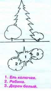 как правильно посадить ель2