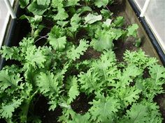 Our Heirloom Produce: Greenhouses, Picture Show, Seeds, Veggies, Canning, Garden, Pictures, Green Houses, Photos
