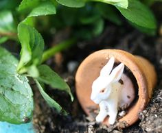 Easter Herb Garden How-To and Herb Quiche Recipe // Swede Cottage Farm //