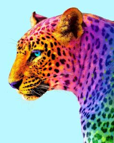 Animals: The Magnificent Rainbow Makeover Edition - World's largest collection of cat memes and other animals Baby Animals Super Cute, Pretty Animals, Colorful Animals, Cute Little Animals, Cute Funny Animals, Animals Beautiful, Cute Dogs, Baby Animals Pictures, Cute Animal Pictures