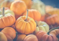 """What you plant now you will harvest later."""" -Og Mandino by york_wallcoverings Ayurvedic Diet, Eat Seasonal, Oven Dishes, Go For It, Mini Pumpkins, Beef Stroganoff, Pumpkin Recipes, Diet Recipes, Delicious Recipes"""
