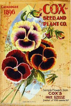 1896-Coxs-Pansies-Vintage-Flowers-Seed-Packet-Catalogue-Advertisement-Poster