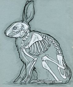 skeleton of a bunny
