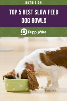 Is your dog eating too fast? This can cause serious health issues if left unchecked. Slow feed dog bowls can be the answer you're looking for. We show you the best slow feed dog bowls to help your dog without breaking the bank. Food Dog, Make Dog Food, Puppy Food, Homemade Dog Treats, Healthy Dog Treats, Pet Treats, Healthy Food, Dog Treat Recipes, Dog Food Recipes
