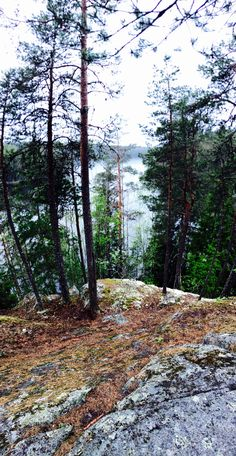 TREKKING IN FINLAND: Liesjärvi National Park! One of the things that make trekking great, besides the beauty of the nature, are the people you meet by the campfires...