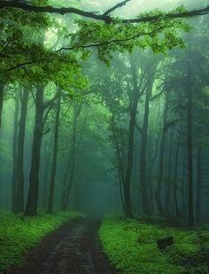 Green foggy forest Nature desktop wallpaper, Forest wallpaper, Tree wallpaper, Path wallpaper - Nature no. Misty Forest, Forest Path, Tree Forest, Foggy Forest, Forest Road, Haunted Forest, Forest Trail, Dark Forest, Beautiful World