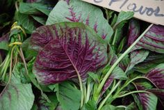 Purple Amaranth leaves in the garden via Gardenista/Tried from farmers market, good in salads/easy to grow she says