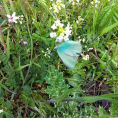 Qui le farfalle hanno i colori delle fate. E non è possibile fotografarle...