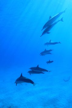 Outstanding Underwater World - Hawaii | hawaiianexplorer.com