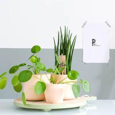 Rouwvliegjes in je planten, hoe kom je er vanaf?