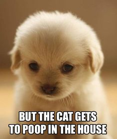 This makes me feel so bad for ever scolding a puppy for pooping in the house.
