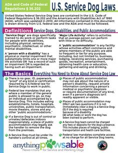 How can we do a mass education on service dog laws/etiquette?