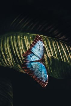 Butterfly On A Leaf by Annie Spratt