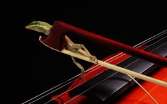 Gecko on a violin? Frog on a violin? Violin Instrument, Animal Magic, Wallpaper Backgrounds, Wallpapers, Background Images, Scream, Music, Weird, Desktop