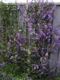 Image result for how to hide ugly colorbond fence Being Ugly, Fence, Pergola, Plants, Image, Outdoor Pergola, Plant, Planets