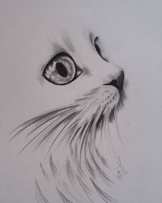 # Cat # Drawing # Eyecat # Artist # Artgallery # Art Illustration # Sketbook # A … - Katzen Pencil Art Drawings, Art Drawings Sketches, Animal Sketches, Animal Drawings, Art Du Croquis, Cat Tattoo Designs, Desenho Tattoo, Art Et Illustration, Drawing Eyes