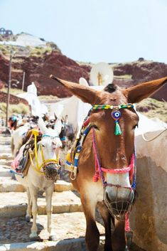 Horses of Santorini that might rival even the photogenic city itself in beauty