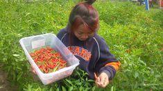 Thai Peppers, Stuffed Peppers, Food, Meal, Stuffed Pepper, Hoods, Eten, Meals
