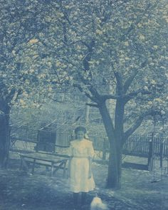 Blossoms - c. 1910s