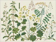Wild Herbs cross stitch pattern