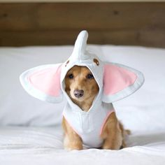 Your downvotes are irrelephant