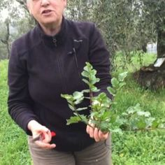Green Garden, Flora, Food And Drink, Herbs, Video, Palazzo, Biscotti, Gardening, Nature
