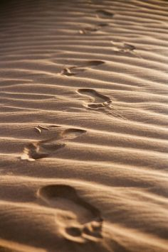 Traces in the Sand. Anubis, Elias Und Laia, The Star Touched Queen, Maleficarum, Prince Of Egypt, Egyptian Mythology, Character Aesthetic, Book Aesthetic, Arabian Nights