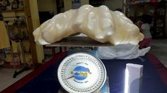 Philippine officials believe they may have recovered the biggest natural giant clam pearl in the world - weighing a whopping 34kg (5.2 stone).