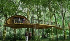 Some people take it a little step further, and create a real tree house, where you can actually live in, or spend a normal time, without the risk of it breaking into pieces. Description from 15pictures.com. I searched for this on bing.com/images