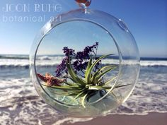 Botanical Art by Joon Buhg    //\\//\\//\\//\\//   Air Plant Terrarium    //\\//\\//\\//\\//    Email us for inquires and orders.