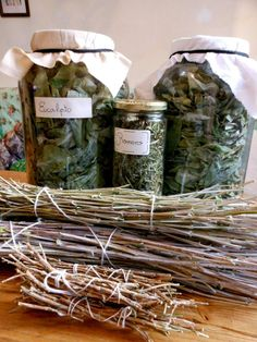 On the first post of this series, I offered a series of tips on learning about herbs for beginning Green Brujas; this second post will be focused on the drying and storage of your herbal bounty :).…