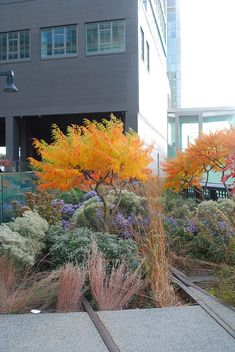 High Line, landscaping, landscape, hardscape, fall foliage